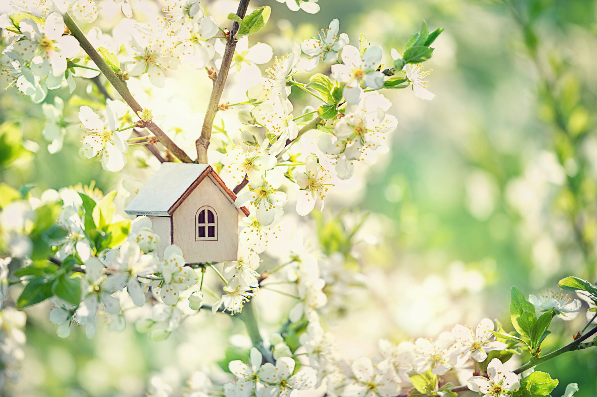 Toy,House,And,Cherry,Flowers.,Spring,Natural,Background.,Concept,Of